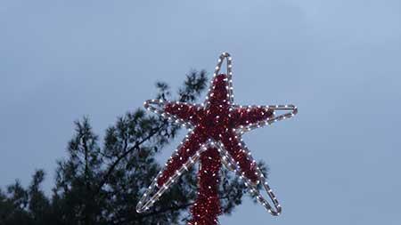 Χριστουγεννιάτικο Δέντρο (4) - Bergmann Kord 2016